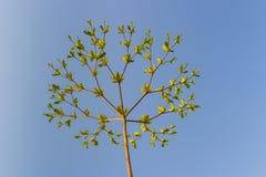 Δέντρο με τους κλάδους κάτω από το μπλε ουρανό Στοκ εικόνα με δικαίωμα ελεύθερης χρήσης