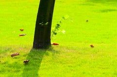 δέντρο ριζών Στοκ Εικόνα