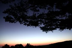 Δέντρο σκιαγραφιών ηλιοβασιλέματος Στοκ Φωτογραφίες