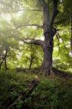Δέντρο στο πράσινο δάσος φύσης Στοκ φωτογραφία με δικαίωμα ελεύθερης χρήσης