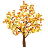 Δέντρο σφενδάμνου φθινοπώρου Στοκ Εικόνες