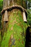 Δέντρο σχοινιών Στοκ εικόνα με δικαίωμα ελεύθερης χρήσης
