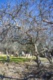 Δέντρο σύκων Στοκ φωτογραφία με δικαίωμα ελεύθερης χρήσης