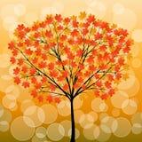 δέντρο φθινοπώρου Στοκ φωτογραφία με δικαίωμα ελεύθερης χρήσης