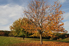 δέντρο φθινοπώρου Στοκ Φωτογραφία