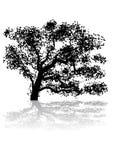 δέντρο Στοκ Εικόνα