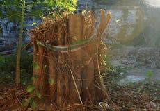 Δέντρο Bodhi Στοκ φωτογραφία με δικαίωμα ελεύθερης χρήσης