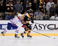 Δαβίδ Krejci, Boston Bruins Στοκ Φωτογραφία