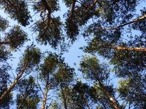 Δασικές άκρες Στοκ φωτογραφίες με δικαίωμα ελεύθερης χρήσης