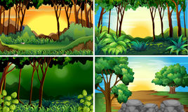 Δασικές σκηνές Στοκ φωτογραφία με δικαίωμα ελεύθερης χρήσης
