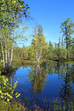 Δασική λίμνη το απόγευμα φθινοπώρου Στοκ Φωτογραφία