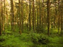 Δασική σκηνή Στοκ εικόνα με δικαίωμα ελεύθερης χρήσης