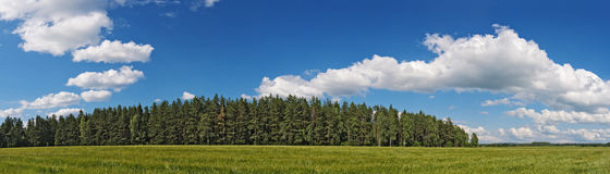 δασικός ουρανός πεδίων γ&e Στοκ φωτογραφία με δικαίωμα ελεύθερης χρήσης