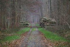 Δασικός δρόμος με τους σωρούς του ξύλου Στοκ Φωτογραφίες