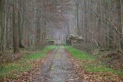 Δασικός δρόμος με τους σωρούς του ξύλου Στοκ Φωτογραφία