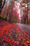 δασικός δρόμος φθινοπώρο& Στοκ Εικόνες