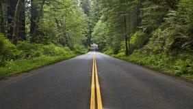 δασικός δρόμος Στοκ φωτογραφίες με δικαίωμα ελεύθερης χρήσης