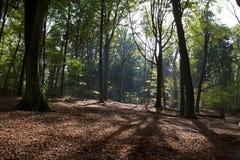 Δασικό πάρκο Zypendaal Στοκ φωτογραφία με δικαίωμα ελεύθερης χρήσης