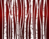Δασικό σχέδιο δέντρων σημύδων Στοκ Εικόνα