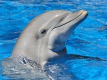 δελφίνι μπουκαλιών που μυρίζεται Στοκ Φωτογραφίες