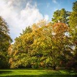 Δενδρολογικός κήπος Westonbirt Στοκ Εικόνες