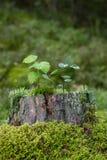 Δενδρύλλια, βρύο και λειχήνα πάνω από ένα κολόβωμα ενός δέντρου Στοκ φωτογραφία με δικαίωμα ελεύθερης χρήσης