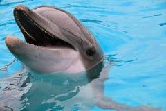 Δελφίνι κινηματογραφήσεων σε πρώτο πλάνο στο μπλε νερό Στοκ Εικόνες