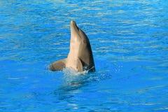 Δελφίνι χορού Στοκ Εικόνες