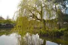 Δημόσιο πάρκο yat-Sen ήλιων στο Βανκούβερ Καναδάς Στοκ φωτογραφία με δικαίωμα ελεύθερης χρήσης