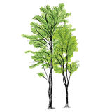 Διάνυσμα δέντρων - χέρι που σύρεται Στοκ Εικόνα