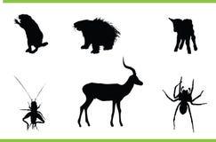 διάνυσμα συλλογής ζώων Στοκ Φωτογραφία