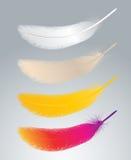 Διάνυσμα φτερών Στοκ Φωτογραφίες