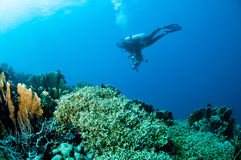 Διάφορες σκληρές κοραλλιογενείς ύφαλοι σε Gorontalo, Ινδονησία Στοκ Εικόνες