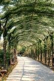 διάδρομος πράσινος Στοκ Φωτογραφίες