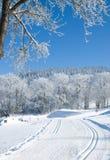 Διαγώνια χώρα που κάνει σκι, βαυαρικό δάσος, Γερμανία Στοκ Εικόνες