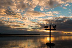 Διαγώνιος κόκκορας προβάτων ηλιοβασιλέματος Στοκ φωτογραφίες με δικαίωμα ελεύθερης χρήσης