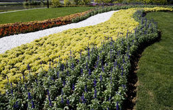 διακοσμήστε τα λουλού&de Στοκ φωτογραφίες με δικαίωμα ελεύθερης χρήσης