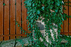 Διακοσμητικός φράκτης φιαγμένος από σανίδες 3 Στοκ Φωτογραφίες