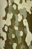 Διακριτικός φλοιός Στοκ εικόνα με δικαίωμα ελεύθερης χρήσης