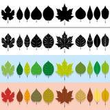 Διανυσματικά φύλλα καθορισμένα Στοκ φωτογραφία με δικαίωμα ελεύθερης χρήσης