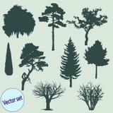 Διανυσματική απεικόνιση των σκιαγραφιών δέντρων Στοκ Εικόνες