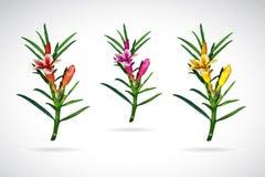 Διανυσματική εικόνα του λουλουδιού adenium Στοκ Εικόνες