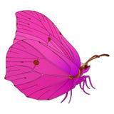 Διανυσματική πεταλούδα. Στοκ φωτογραφία με δικαίωμα ελεύθερης χρήσης