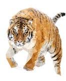 Διανυσματική τίγρη Στοκ φωτογραφία με δικαίωμα ελεύθερης χρήσης