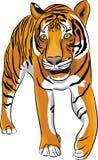 Διανυσματική τίγρη Στοκ εικόνα με δικαίωμα ελεύθερης χρήσης