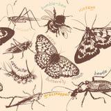 Διανυσματικό άνευ ραφής σχέδιο ταπετσαριών με τα λεπτομερή έντομα στο vinta Στοκ Εικόνα