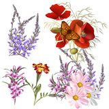 Διανυσματικό σύνολο λεπτομερών χρωματισμένων λουλουδιών Στοκ Εικόνα