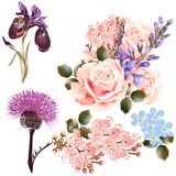 Διανυσματικό σύνολο λεπτομερών χρωματισμένων λουλουδιών Στοκ Φωτογραφίες