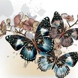 Διανυσματικό υπόβαθρο μόδας με τις πεταλούδες Στοκ φωτογραφία με δικαίωμα ελεύθερης χρήσης
