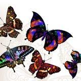 Διανυσματικό υπόβαθρο πεταλούδων Στοκ εικόνες με δικαίωμα ελεύθερης χρήσης